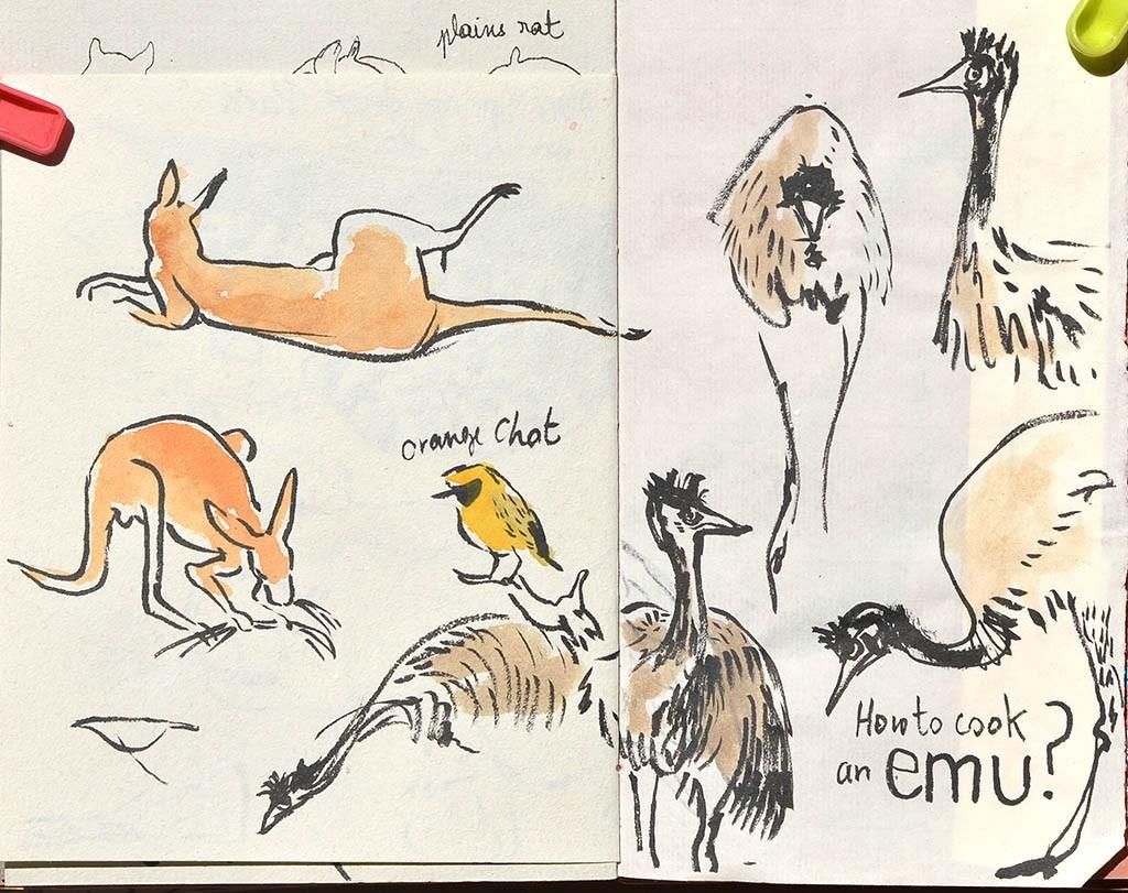 kangoos