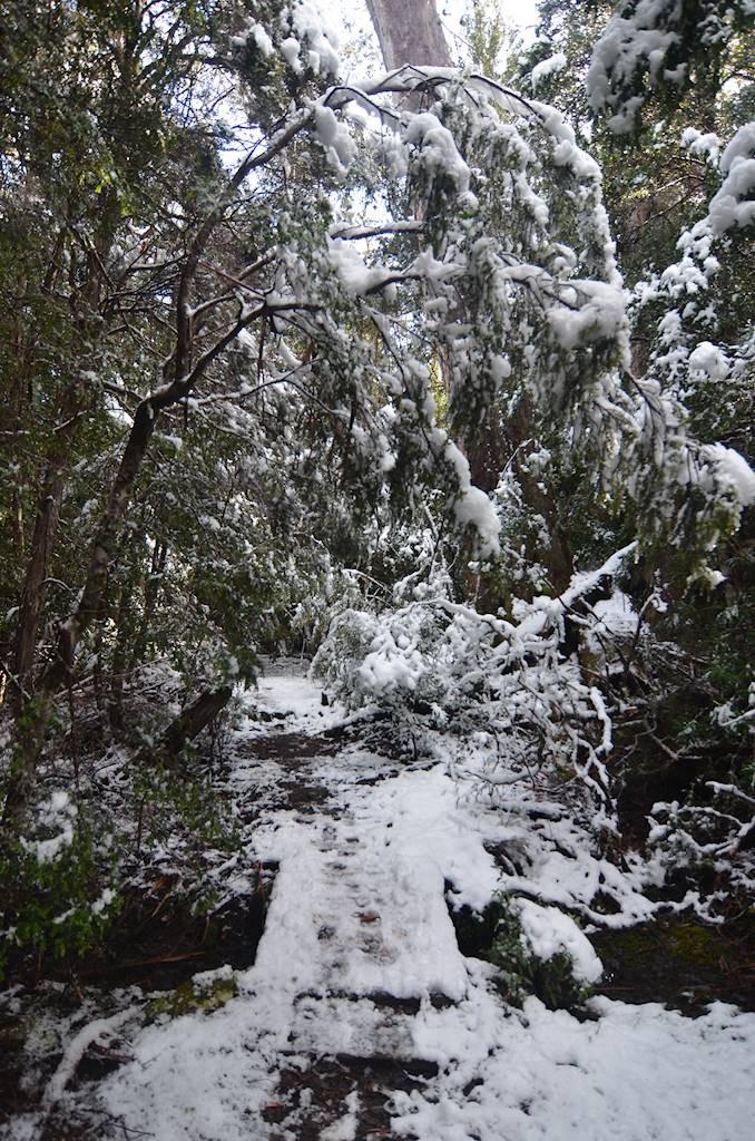 Un peu plus de neige...