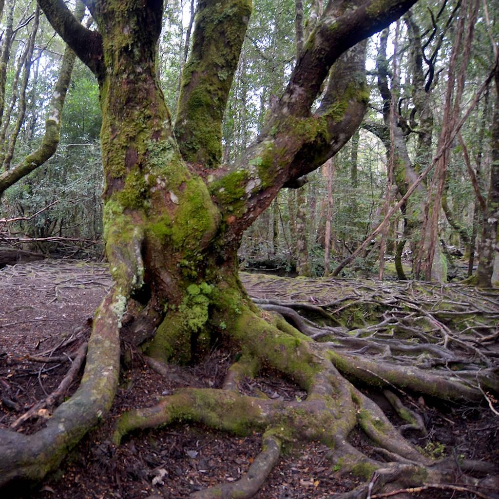Les arbres centenaires...